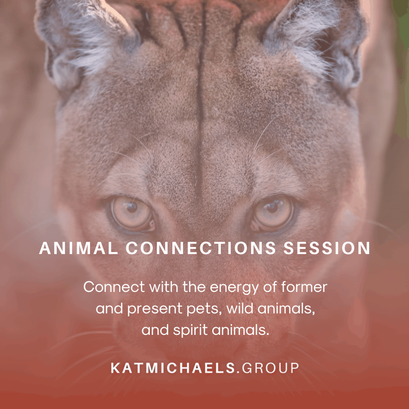 animal connections session